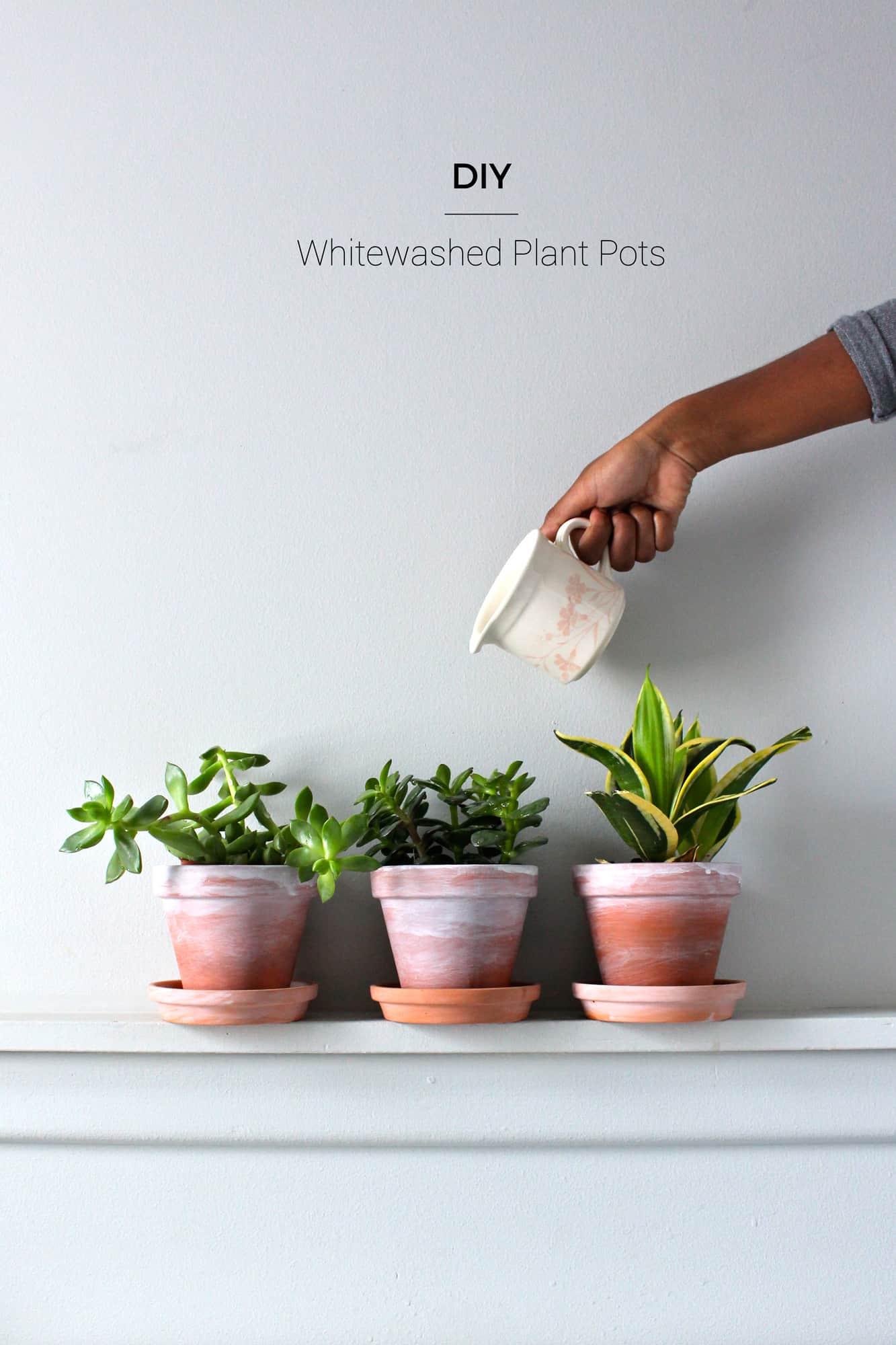 DIY Whitewashed Plant Pots   Fish & Bull